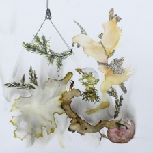 """Pam Rogers, """"A Bird Sings from the Juniper Tree,"""" 2015, Juniper pigments, graphite, ink, carbon (Juniper plant berries, bark, and leaves), 12 x 12 in."""