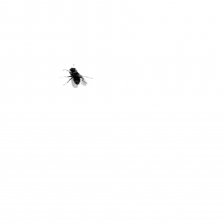Silvia Rivas Faith, from the series Buzzing, 2011 HD video, Ed. 5 of 5 Courtesy of the Artist and Gachi Prieto  Gallery